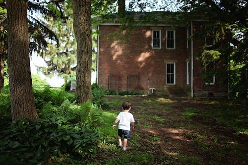 Imagine de stoc gratuită din arbori, arhitectură, băiat, clădire