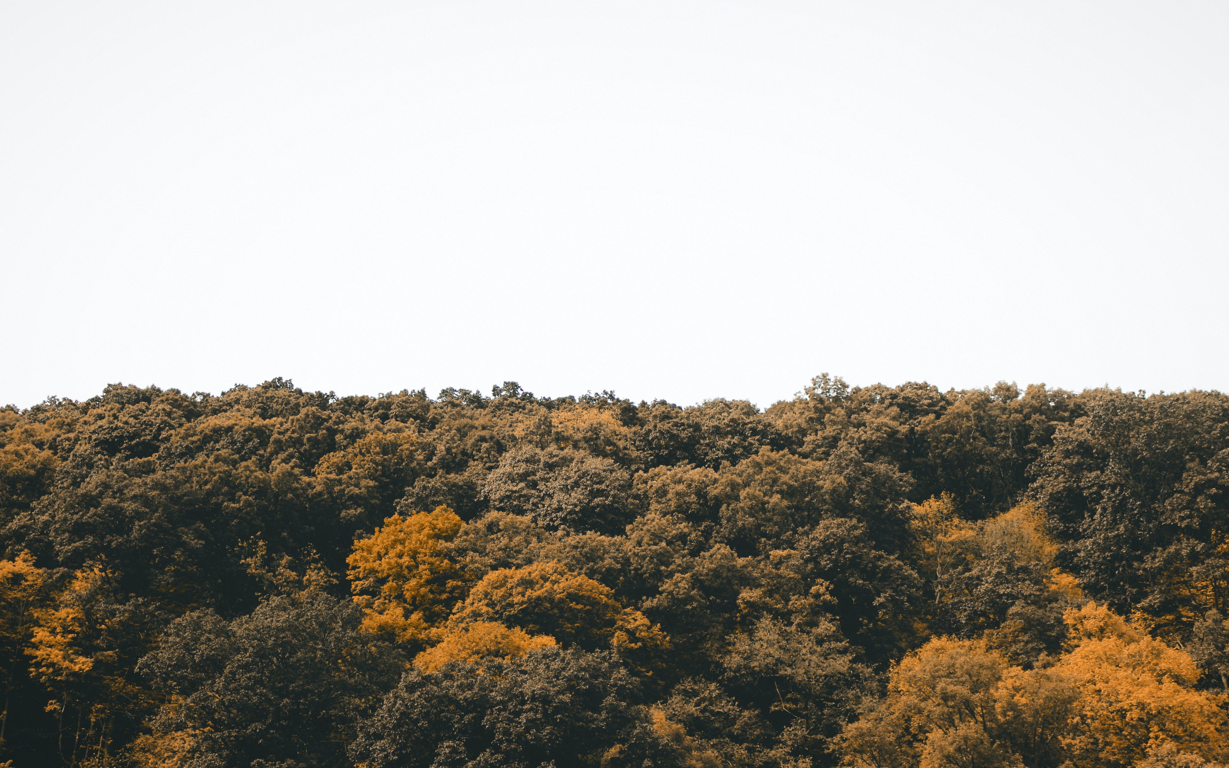 Ảnh lưu trữ miễn phí về bầu trời, cây, gỗ, màu xanh lá