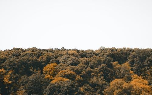 ağaçlar, gökyüzü, manzara, orman içeren Ücretsiz stok fotoğraf