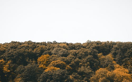 Fotobanka sbezplatnými fotkami na tému krajina, lesy, obloha, stromy