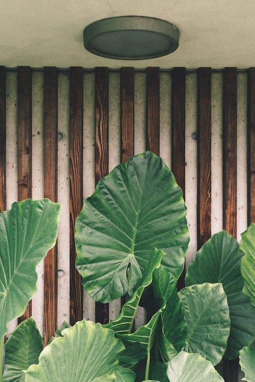 Photos gratuites de feuilles vertes, fleurir, flore, luxuriant