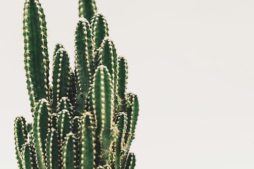 Зеленый кактус