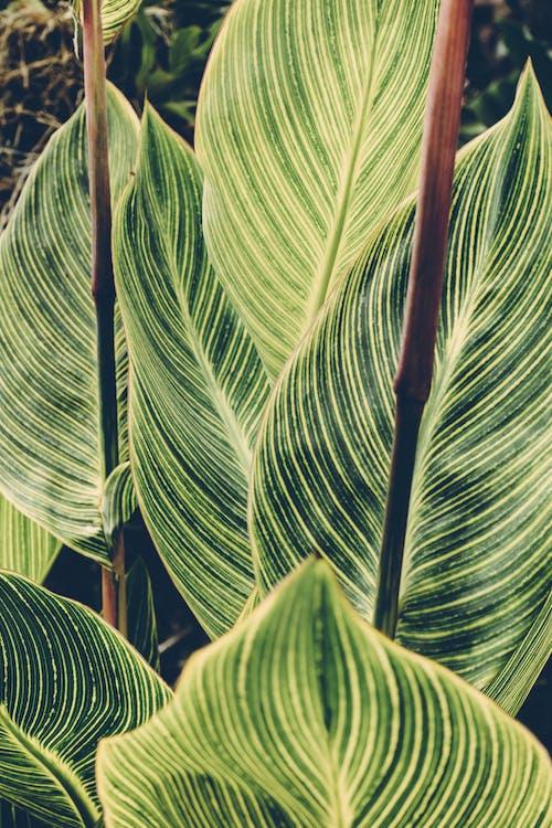 Foto d'estoc gratuïta de planta