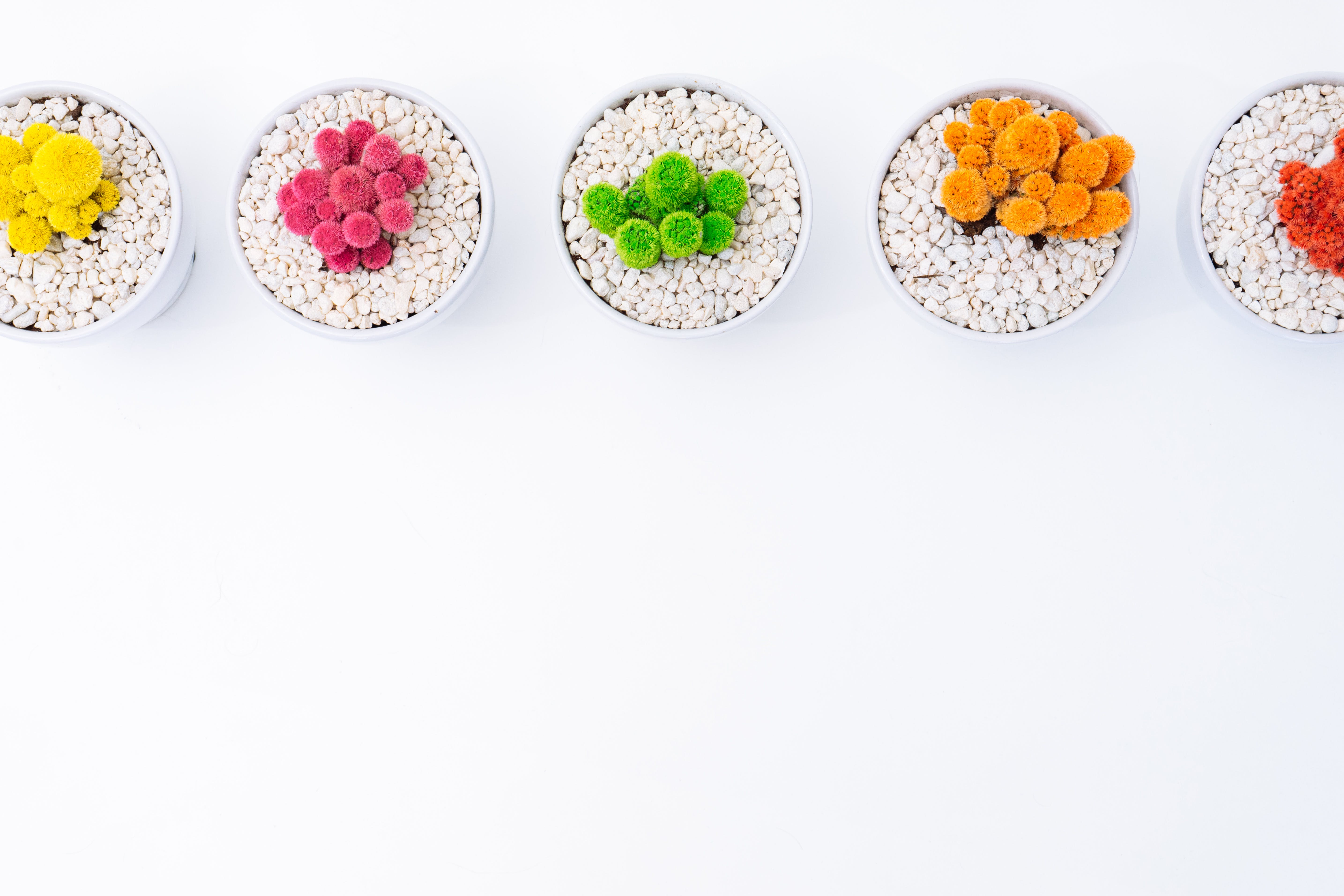 Five Multicolored Potted Plants