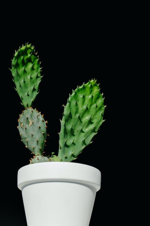 Fotos de stock gratuitas de cacerola, cactus, columna vertebral, con espinas