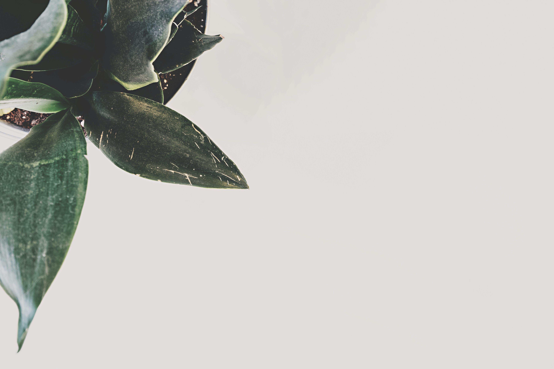 Безкоштовне стокове фото на тему «домашня рослина, завод»