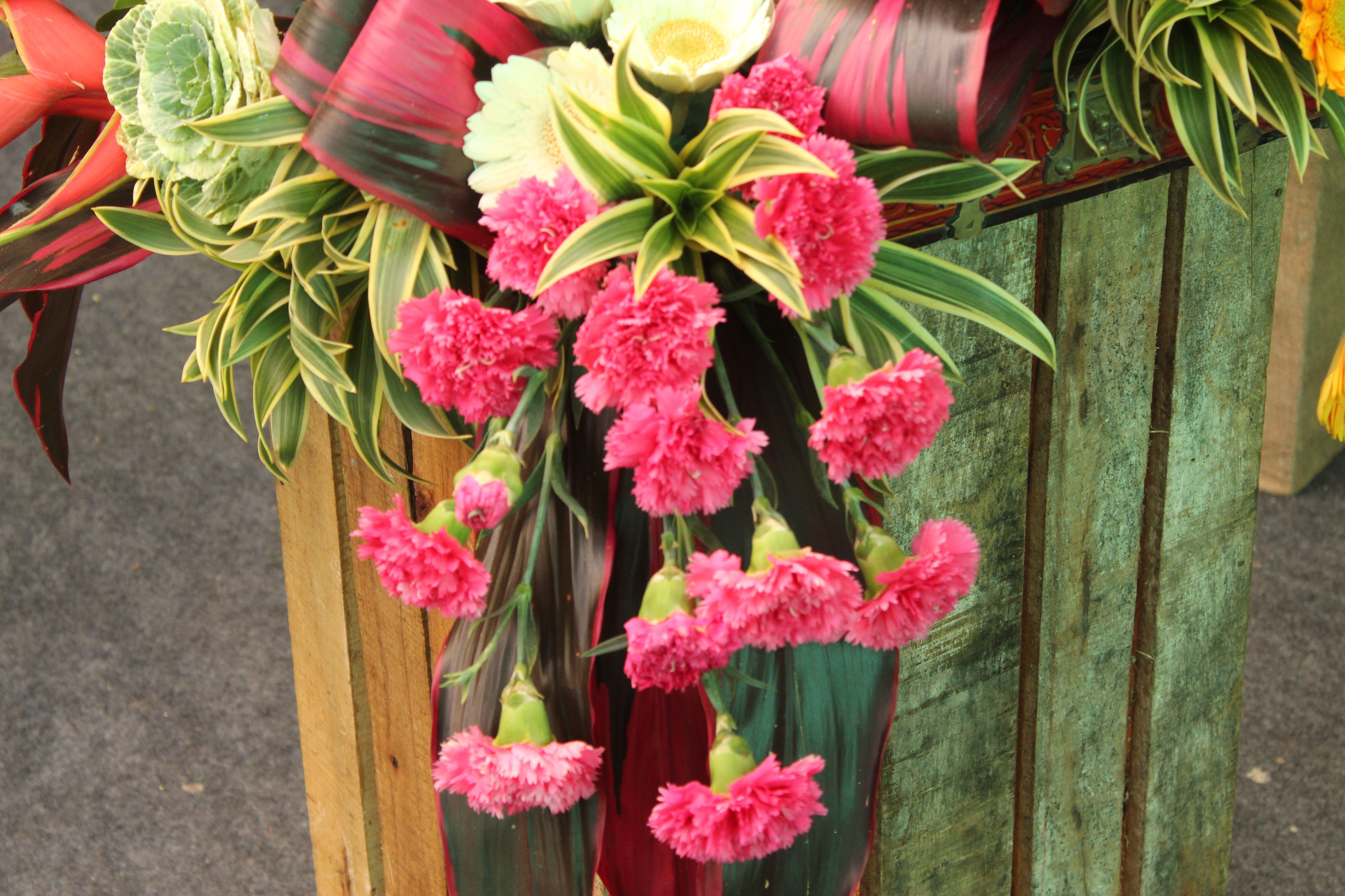 Základová fotografie zdarma na téma aranžování květin, červené kytky, krásné květiny, květinový záhon