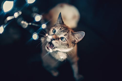 Brown Cat Playing with String Lights
