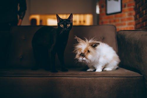 Fotos de stock gratuitas de animal, animal domestico, animales, felino