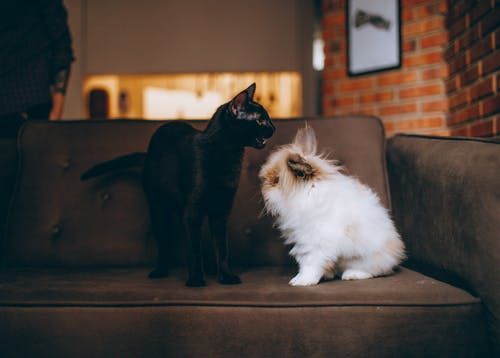 Black Cat Facing on White Dog on Sofa
