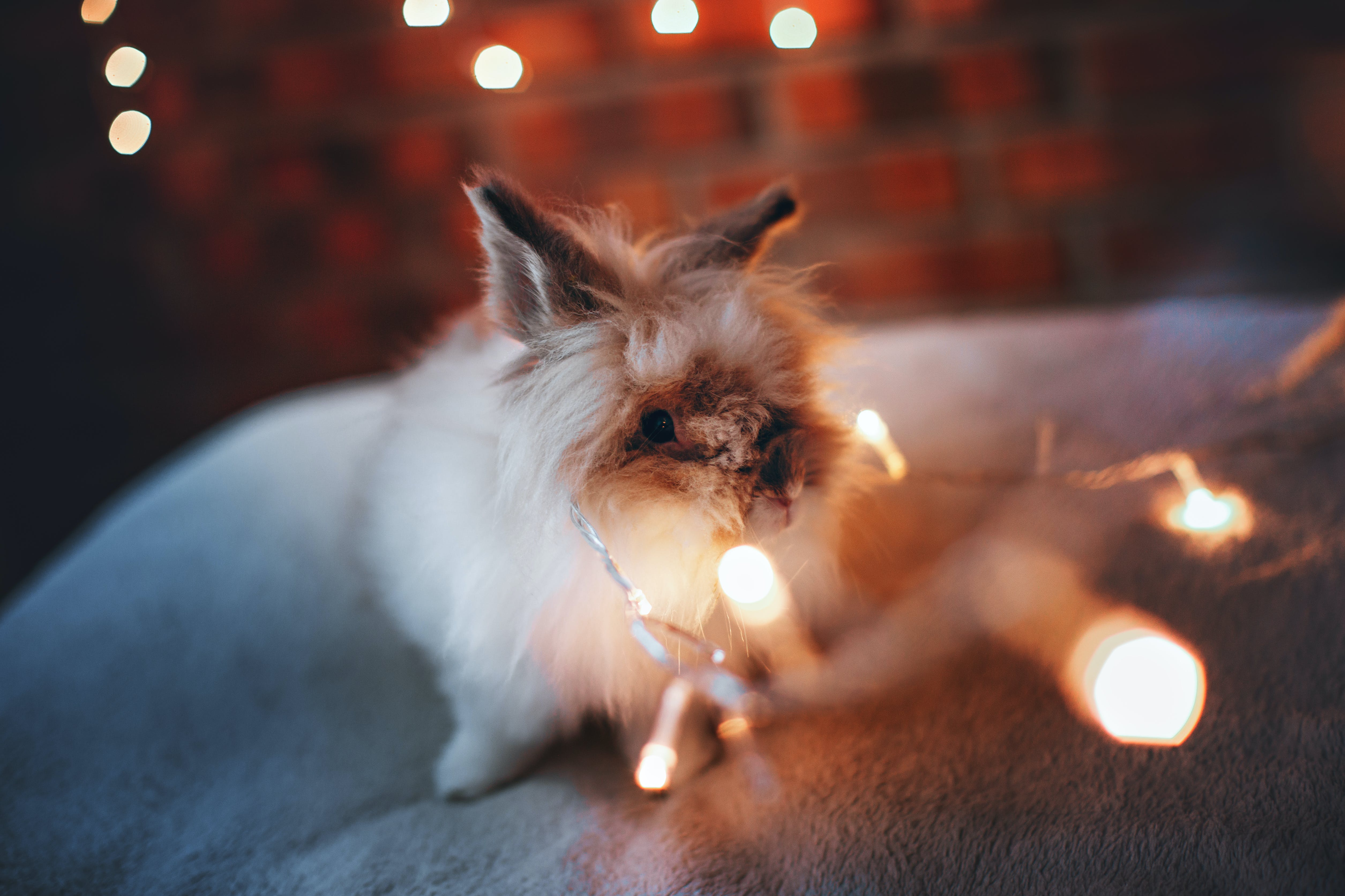 Selective Focus Photography Of White Rabbit Near String Lights