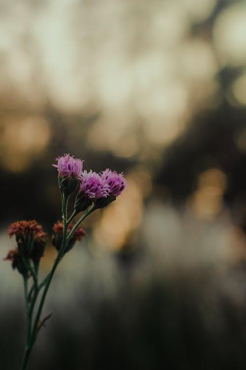Darmowe zdjęcie z galerii z flora, kwiaty, kwitnąć, makro