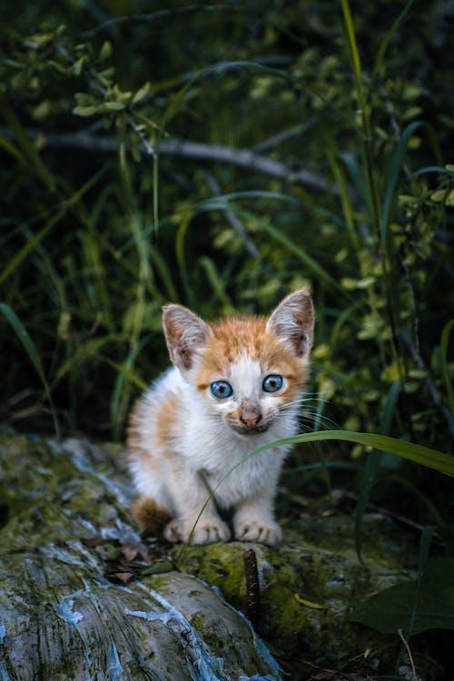 Fotos de stock gratuitas de #al aire libre, #gato