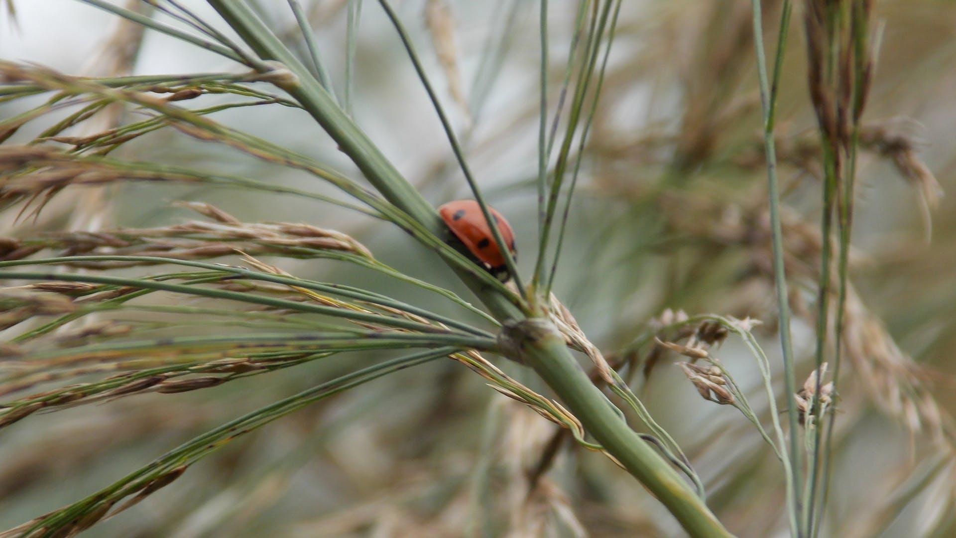 Free stock photo of ladybug