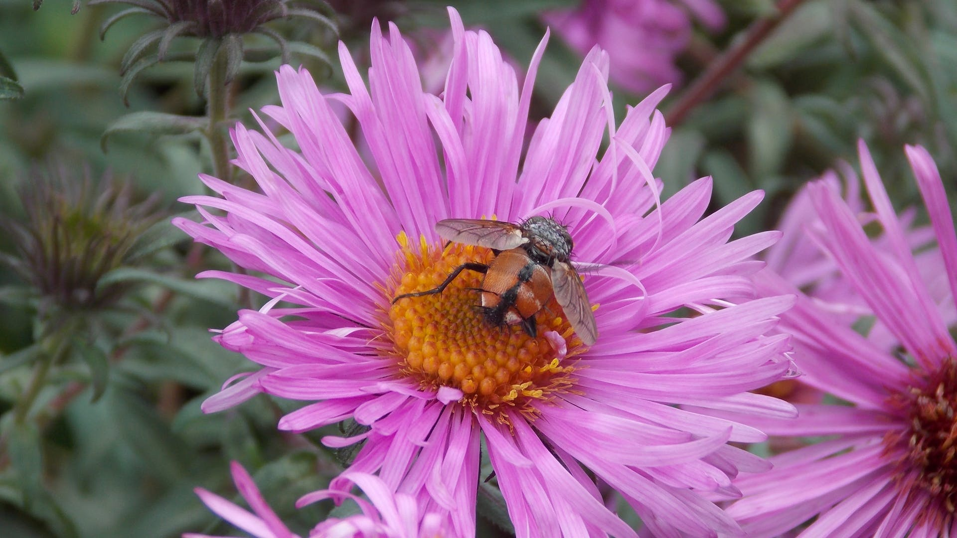 Free stock photo of bee, flowers