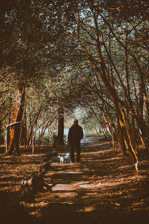 คลังภาพถ่ายฟรี ของ การเดิน, คน, ต้นไม้, ทางเดิน