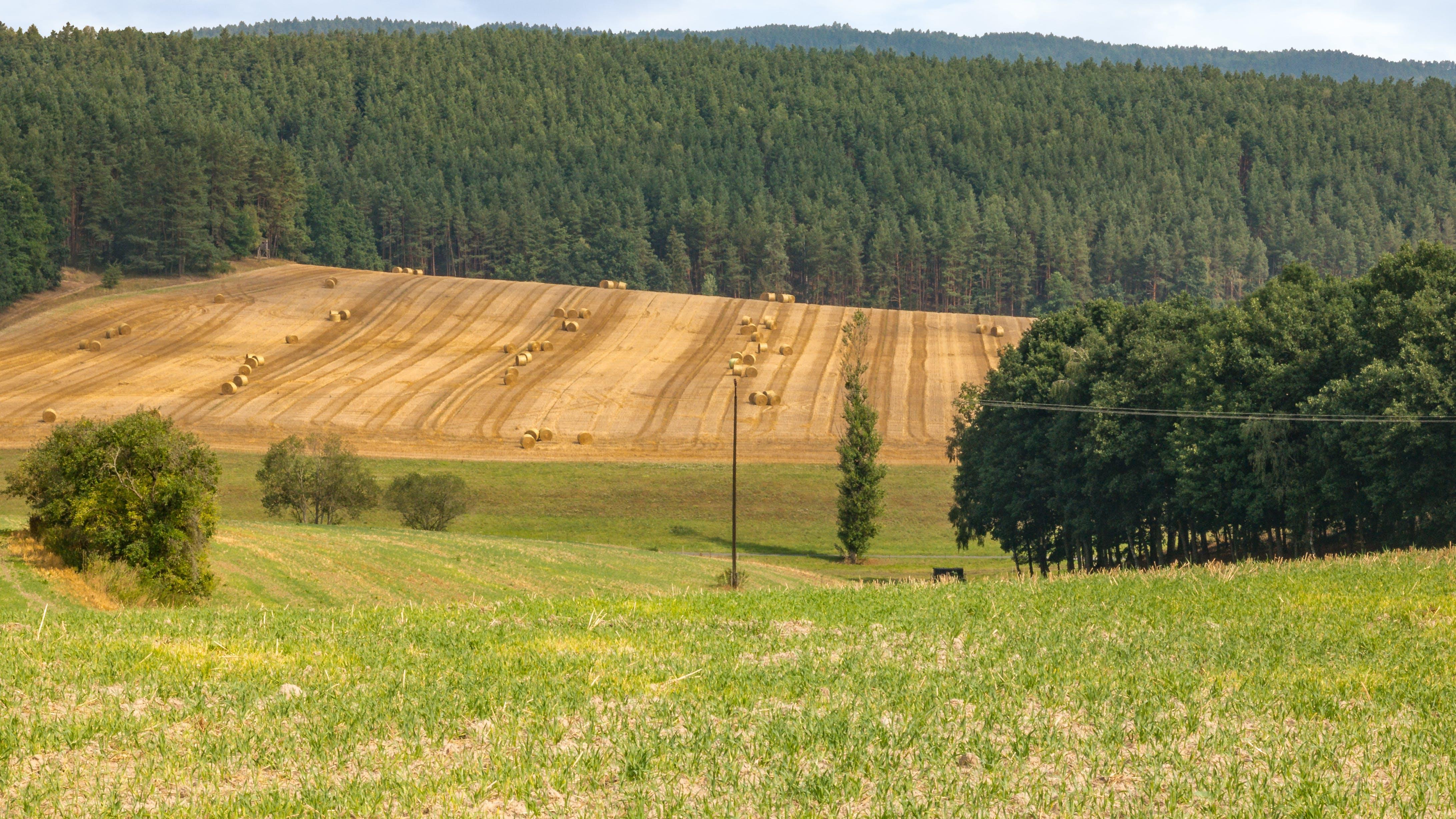 Free stock photo of Landschaft