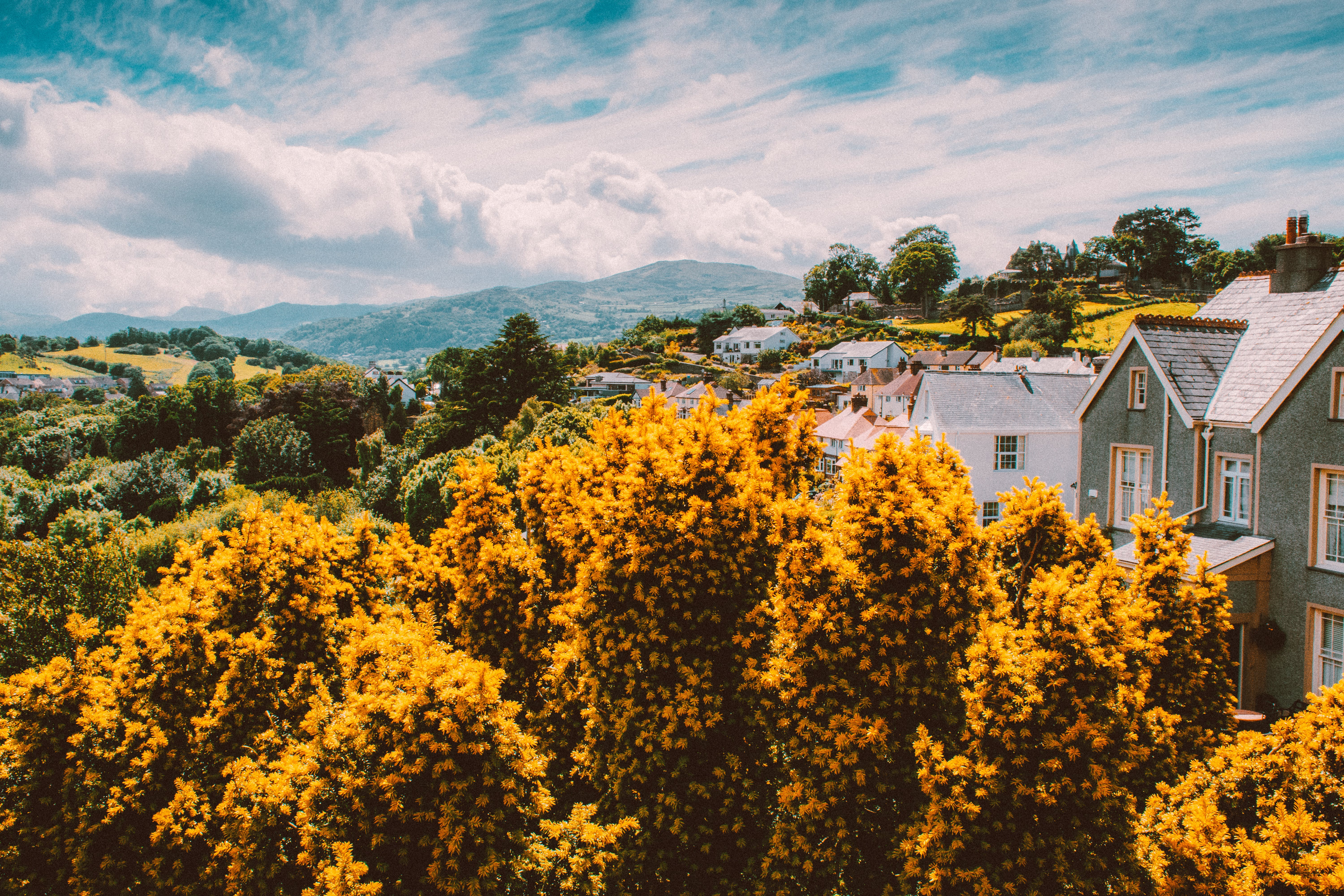 Yellow Tress Surrounded By Houses