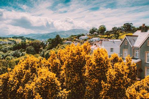 คลังภาพถ่ายฟรี ของ จากข้างบน, ต้นไม้, บ้าน