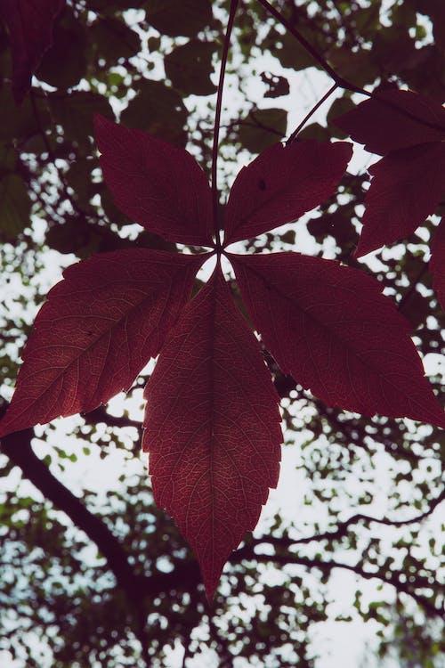 Darmowe zdjęcie z galerii z drzewo, gałąź, głębia pola, liście klonu