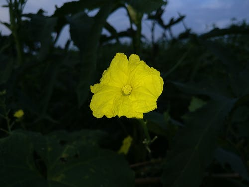 Free stock photo of golden yellow, night