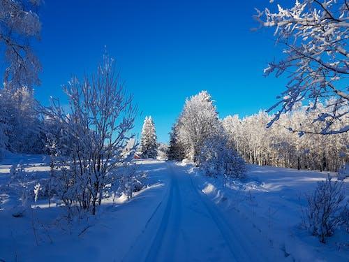 겨울, 겨울 배경, 겨울 풍경, 노르웨이의 무료 스톡 사진
