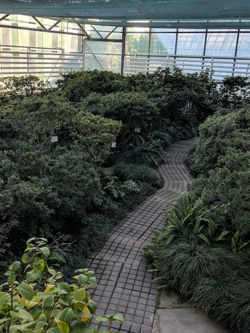 Free stock photo of botanical, botanical garder, close up