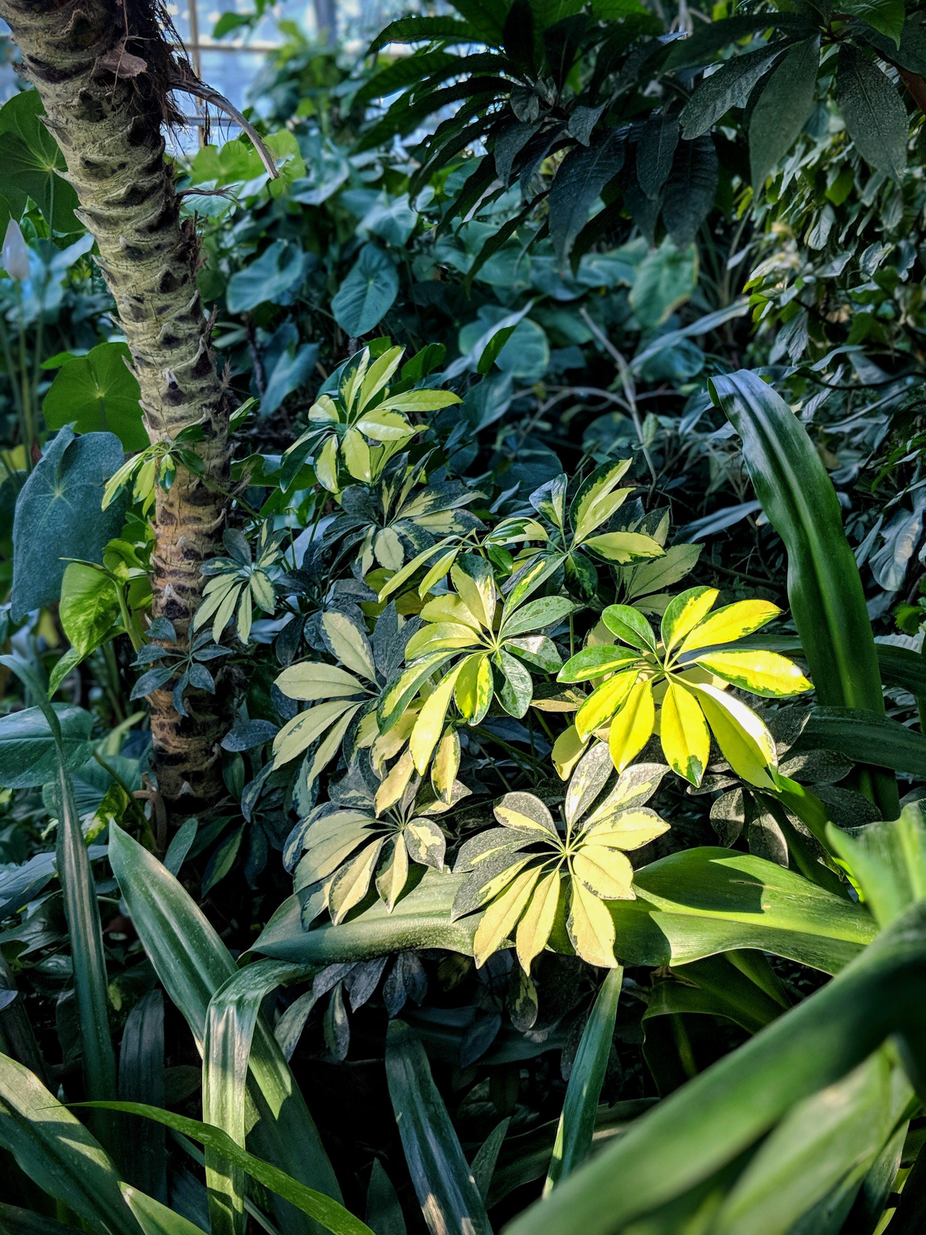 노란색, 녹색, 식물, 식물군의 무료 스톡 사진