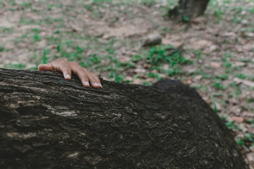 Free stock photo of tree log, woman's hand
