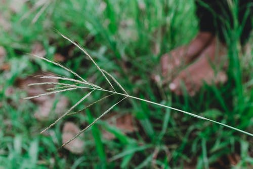Free stock photo of blade of grass, blueprint, feet, green