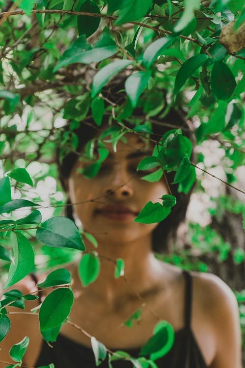 Free stock photo of dame, green leaves, leafs