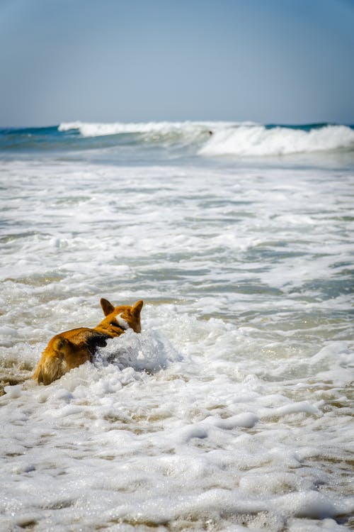 Dog Swimming at the Sea