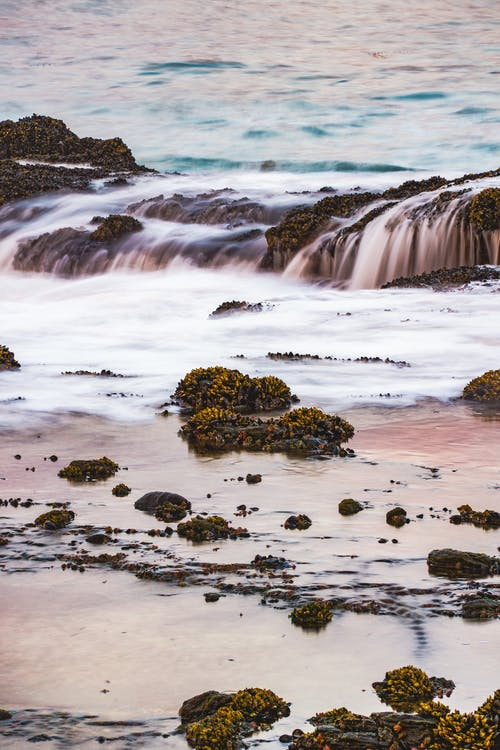 การเปิดรับแสงนาน, ชายหาดลากูน่า, ชีวิตทางทะเล