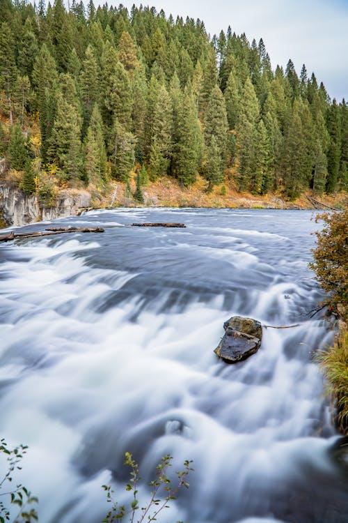 アイダホ, 動物の生活, 川の流れ, 流れの無料の写真素材