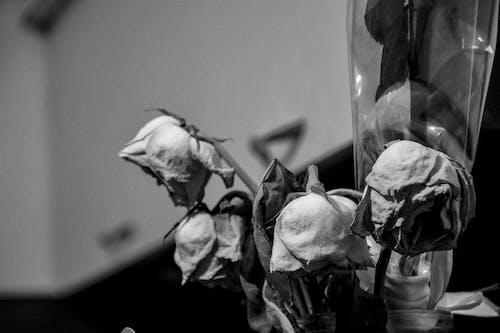 Foto d'estoc gratuïta de blanc i negre, flors, flors boniques, foto macro