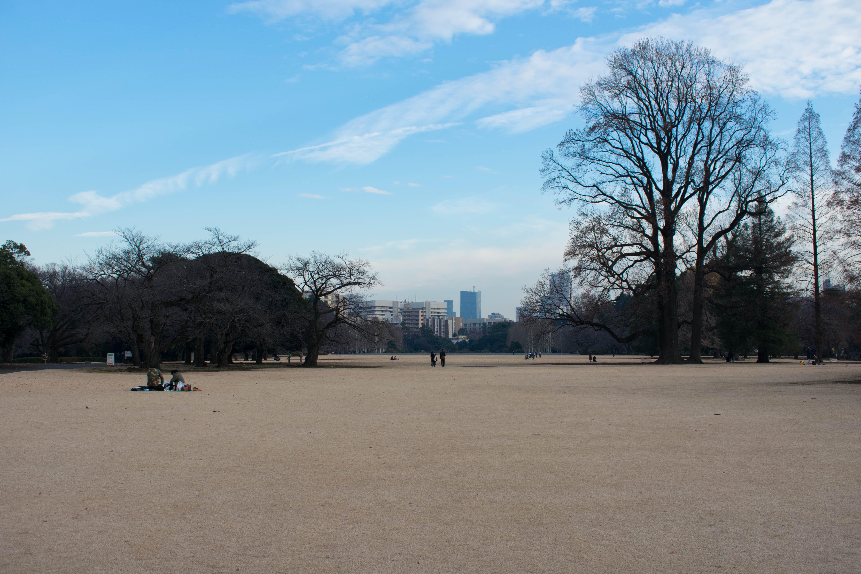 Free stock photo of daytime, holiday, japan, landscape