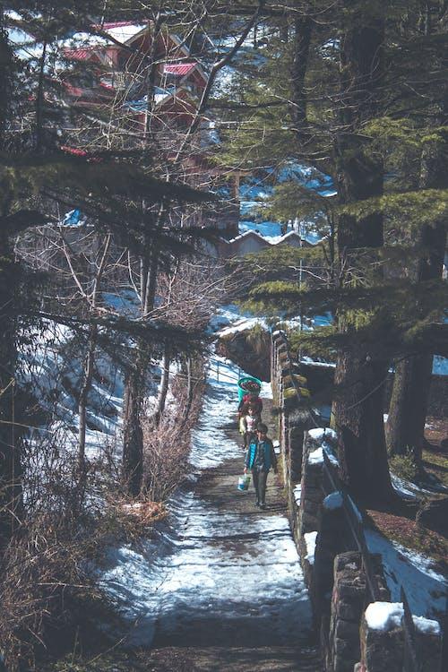 Gratis lagerfoto af miljø, sne, sti, træer