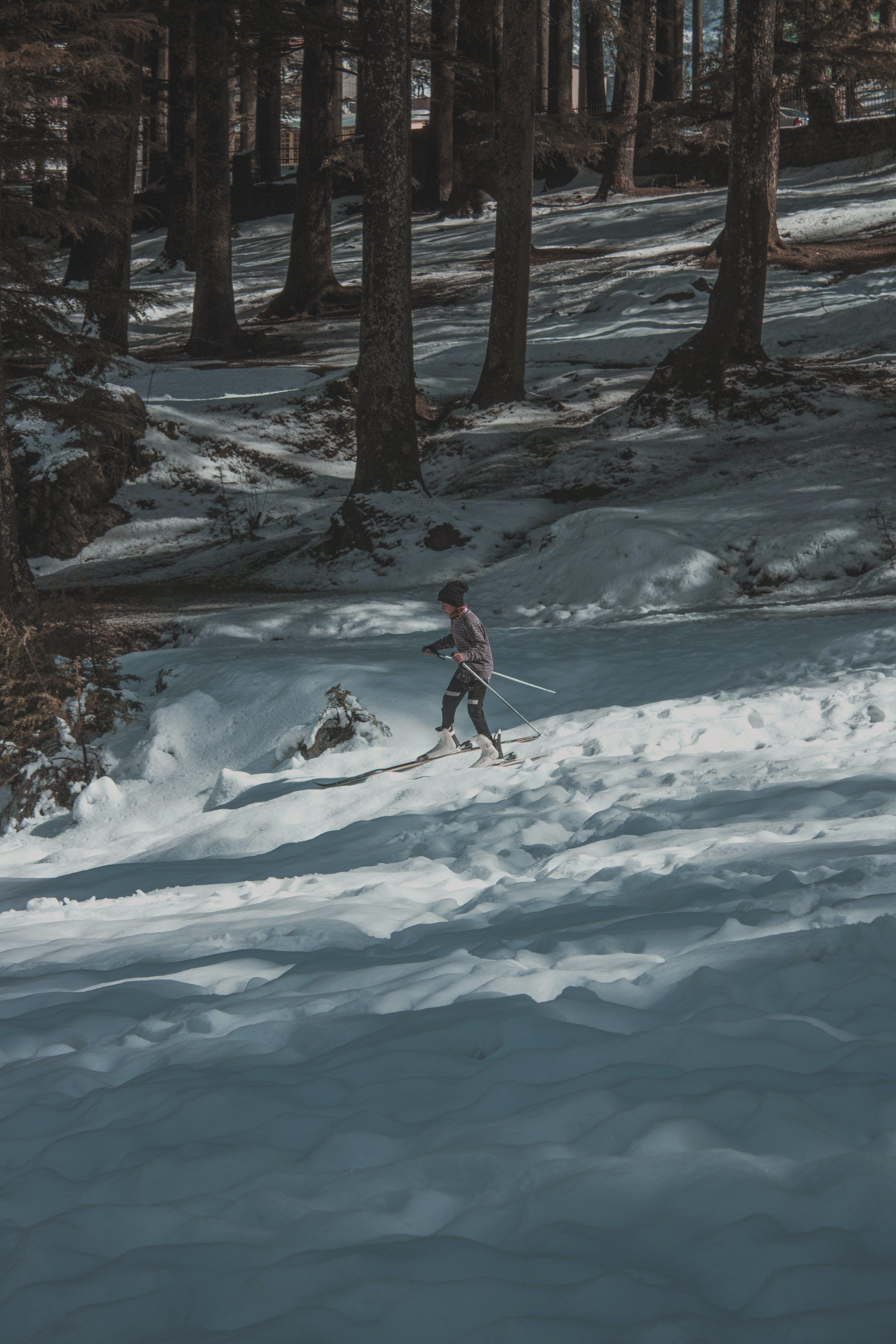 Ảnh lưu trữ miễn phí về băng, băng giá, cây, có tuyết rơi