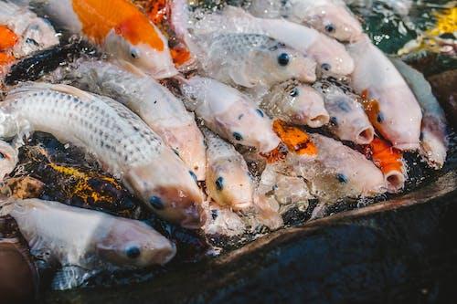 Gratis stockfoto met beesten, dieren, vis, vissen