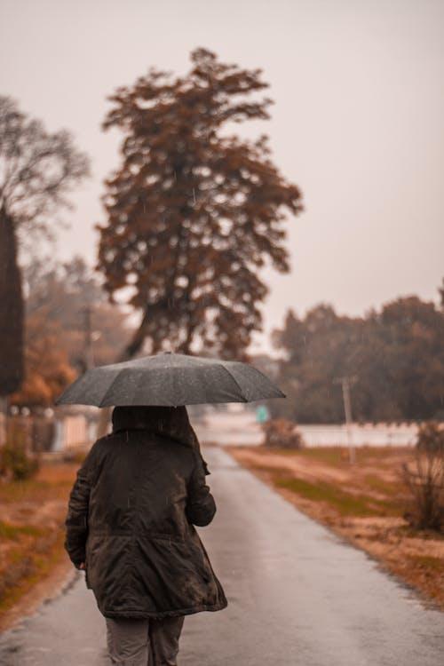 Základová fotografie zdarma na téma cesta, chůze, déšť, deštník