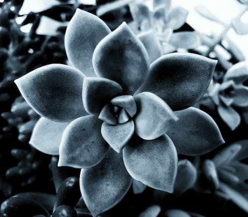 Free stock photo of black and white, grey background, shapes, succulent