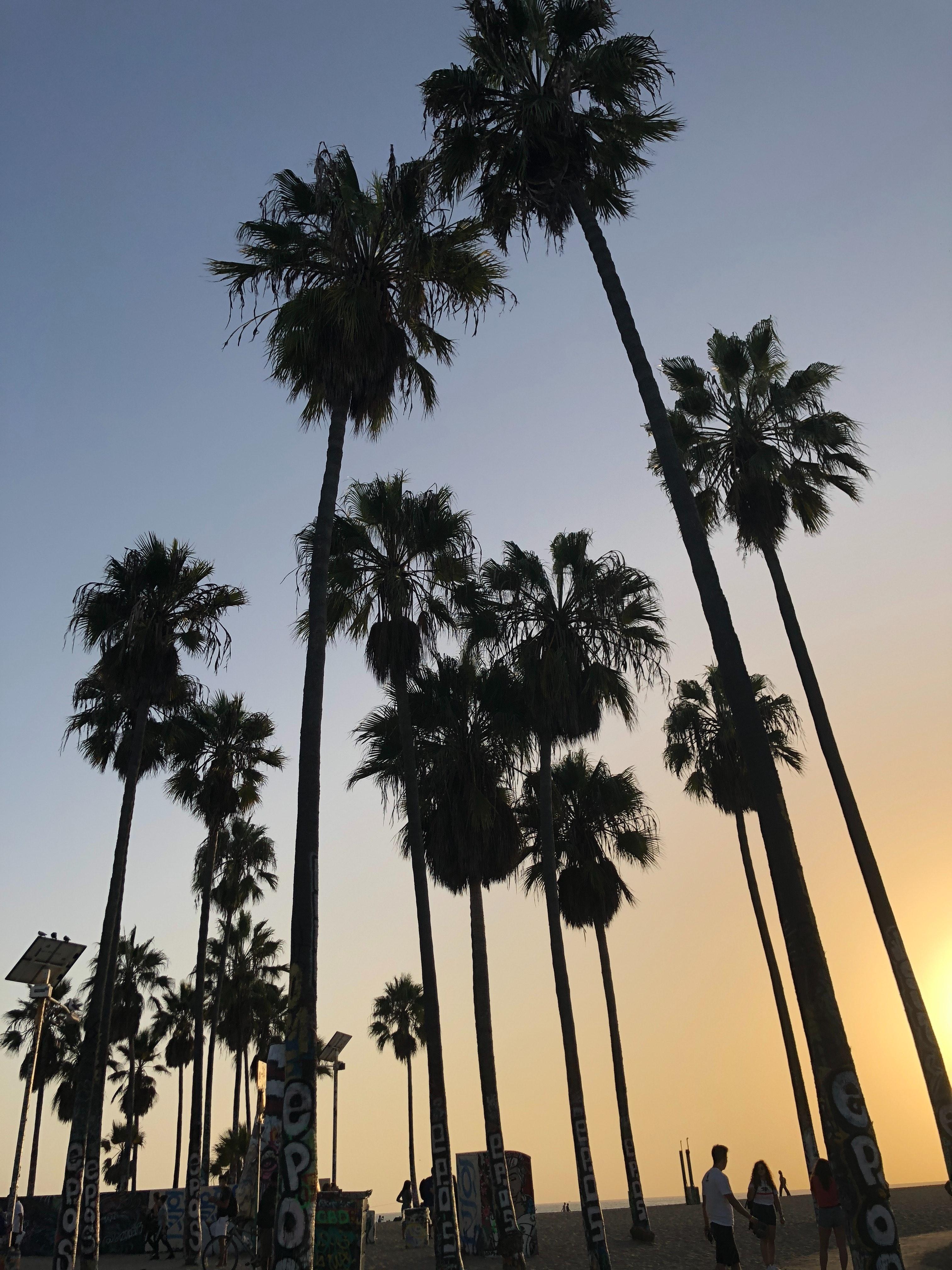 Foto Gratuita Di Los Angeles Natura Palma