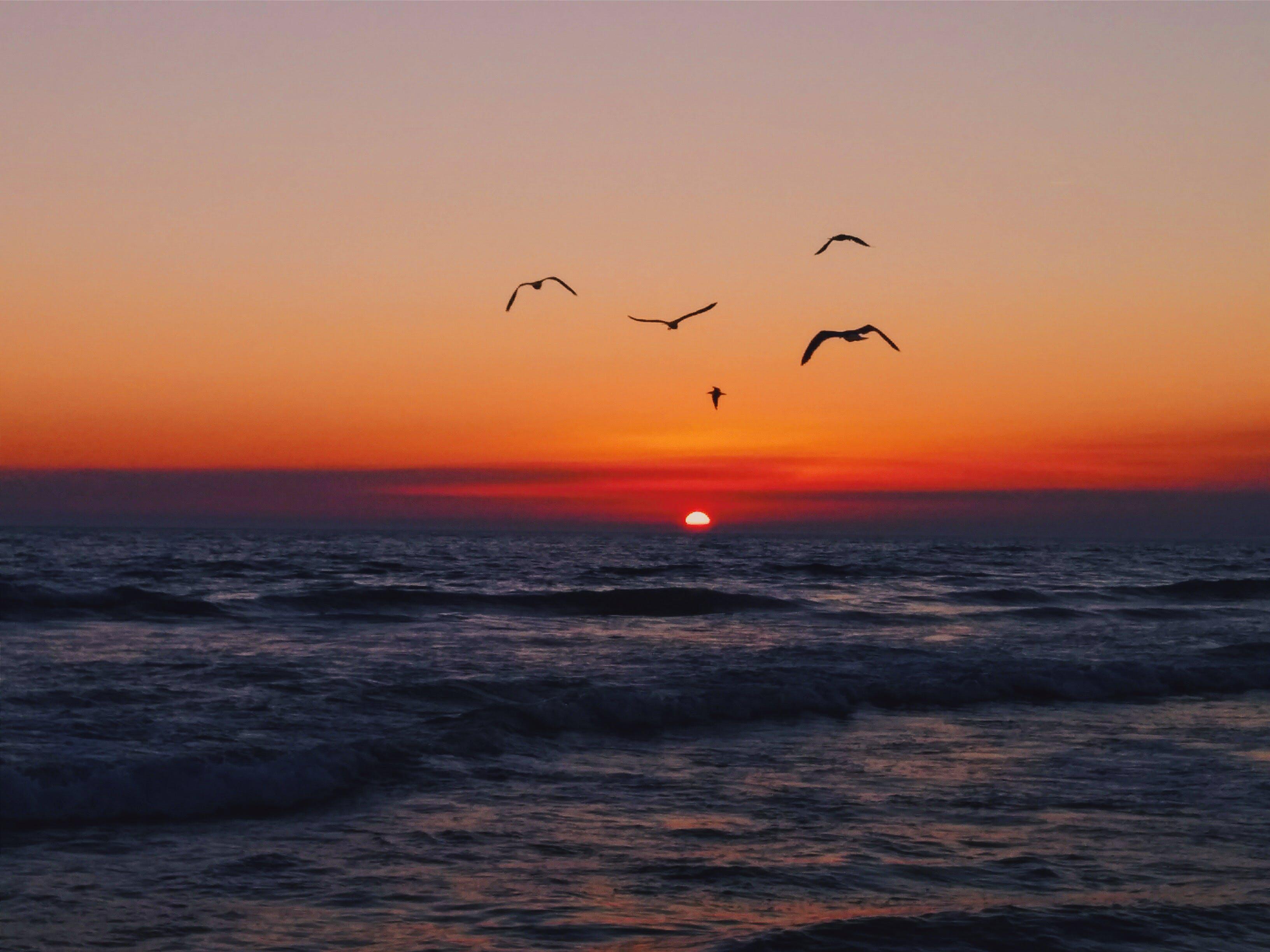 Free stock photo of beach, beautiful, birds, blue sky