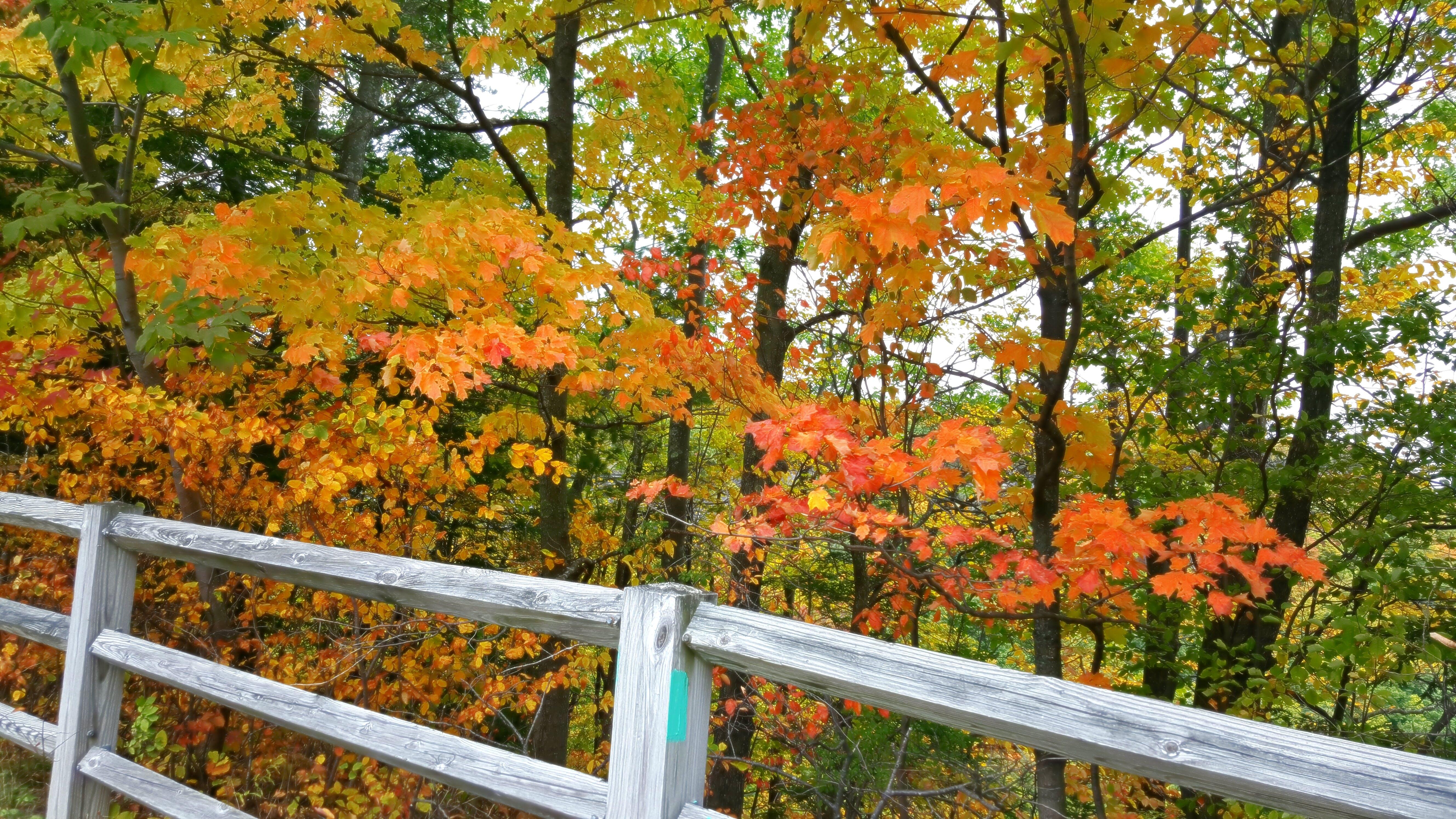 Free stock photo of colors, fall foliage, fall leaves, trees