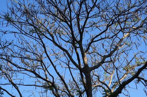 大自然, 樹, 菲律賓 的 免費圖庫相片