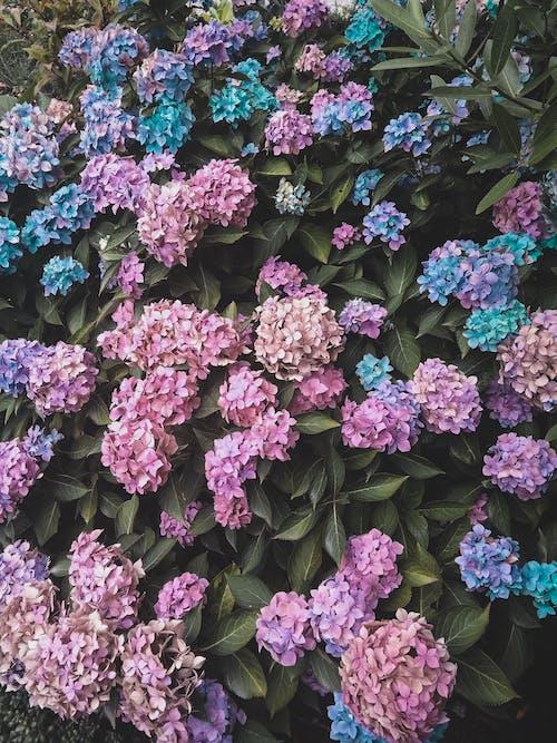 Δωρεάν στοκ φωτογραφιών με flor, ανθόκηπος, λουλούδια, όμορφο λουλούδι