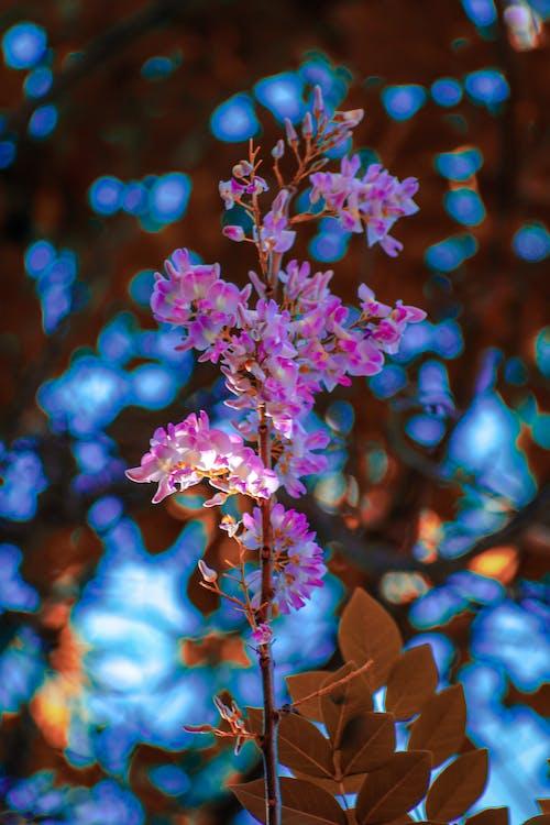Δωρεάν στοκ φωτογραφιών με γαλάζιος ουρανός, λουλούδια, μπλε λουλούδι, μπλε λουλούδια