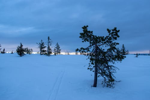 Безкоштовне стокове фото на тему «зима, зимовий пейзаж, зимових фону»