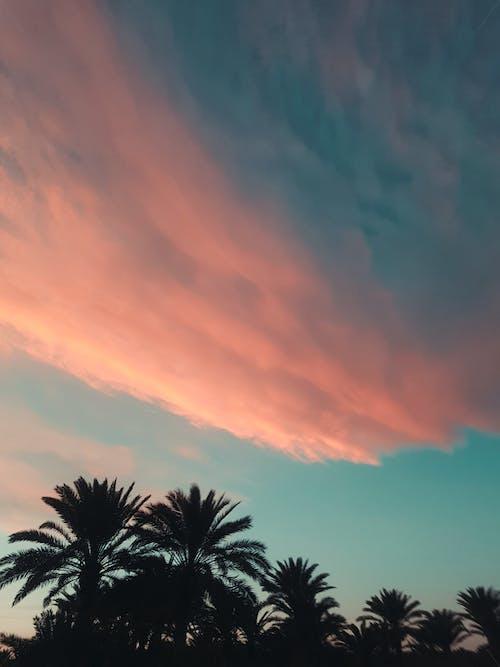 Photos gratuites de lever de soleil, palmiers