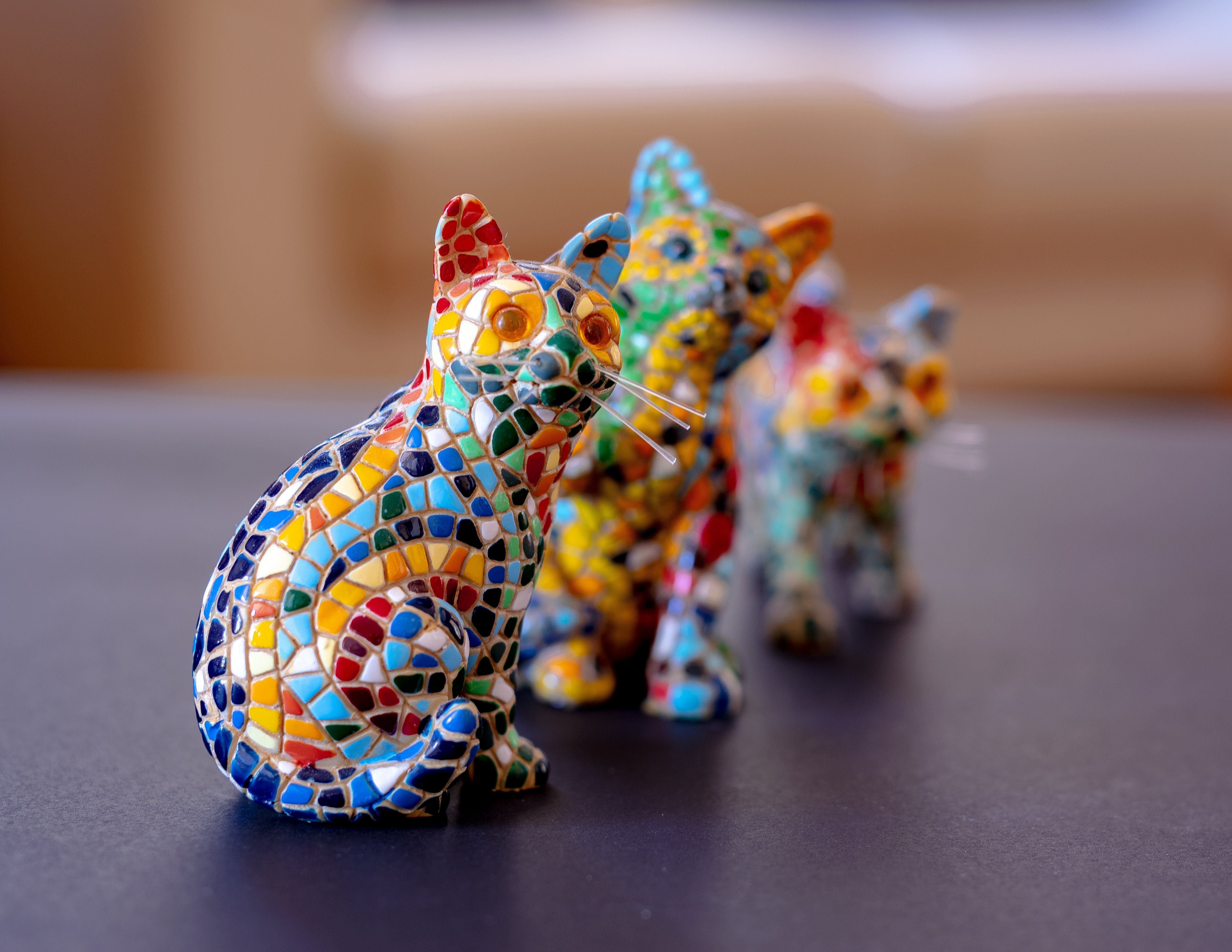Free stock photo of bokeh, cats, cats in colour, colourful